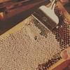 Produkte aus dem Bienenvolk